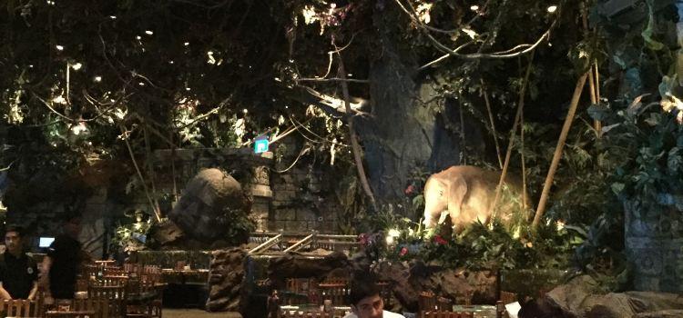 Rainforest Cafe3