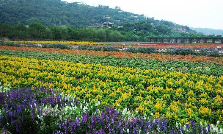 Dan Ying Agricultural Ecological Park4