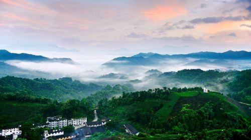 Nanshan Tea Sea View Area