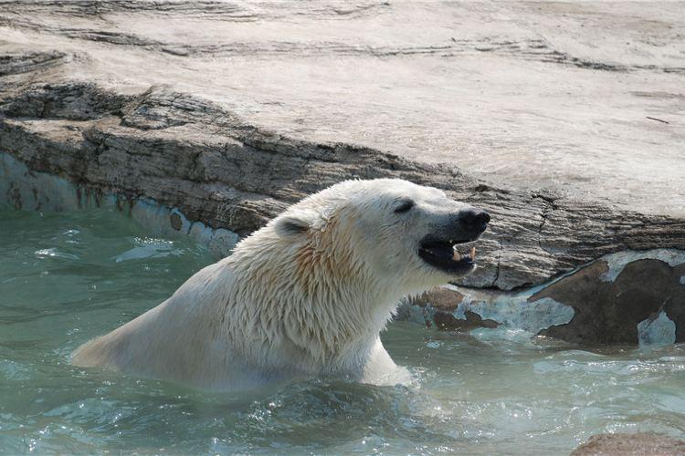 다롄 삼림동물원(대련 삼림동물원)2