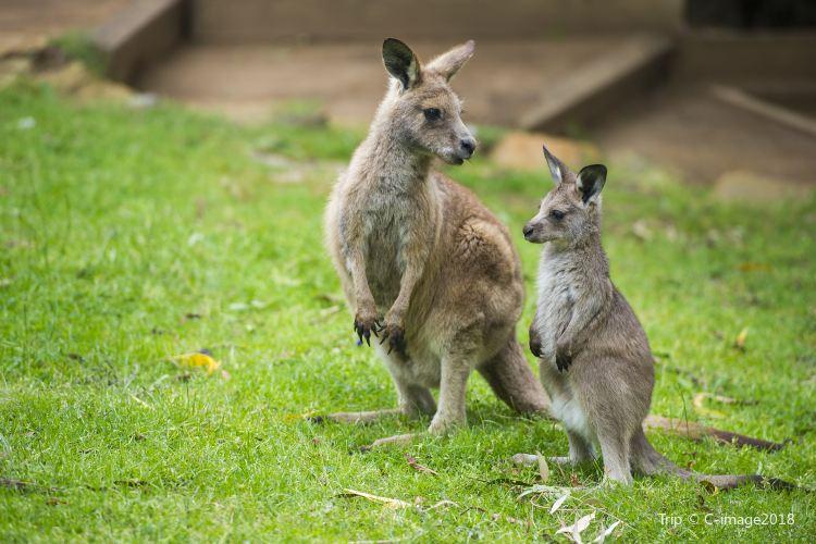 Kangaroo Valley1