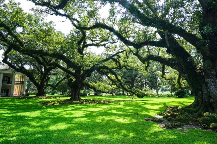 Oak Alley Plantation2
