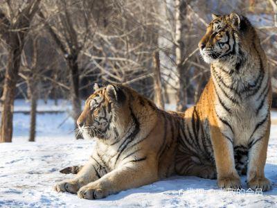 Changbaishan Manchurian Tiger Garden