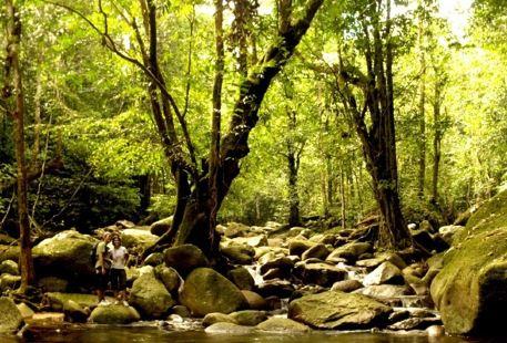 Bukit Gemok森林保護區