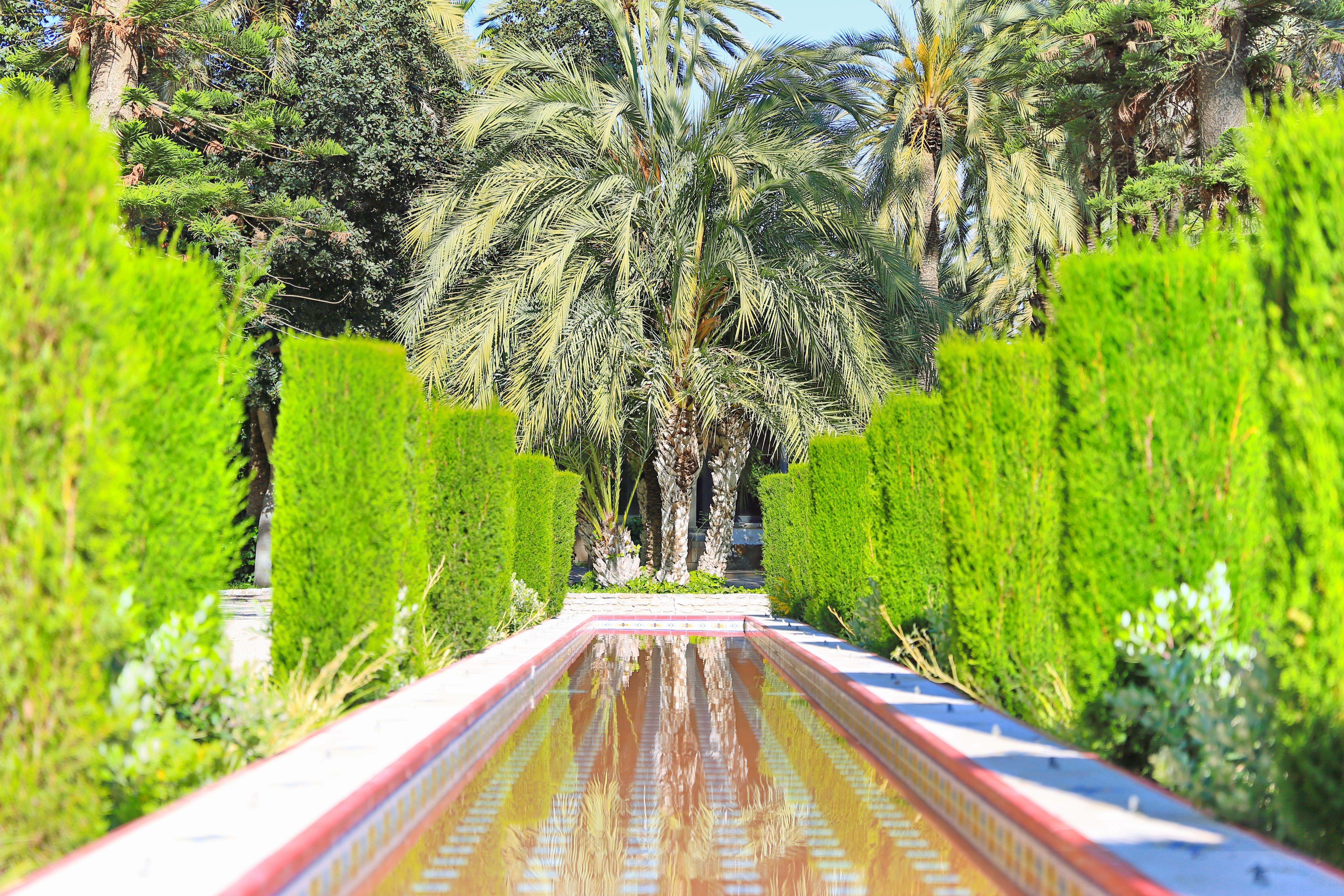 埃爾切棕櫚樹林