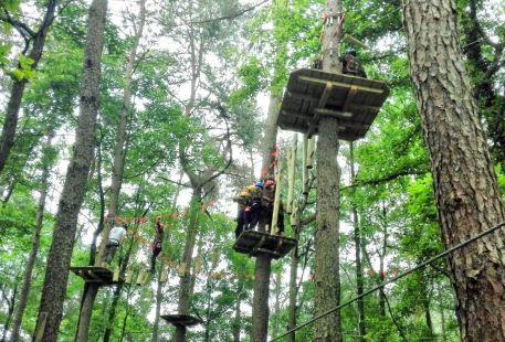 Daqishan Crazy Forest Theme Park