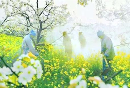 Liucun Pear Garden Scenic Area