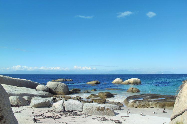 南非企鵝生態保護區