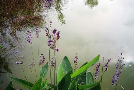 Sihong Egret Reserve