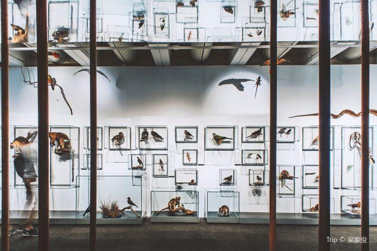 Queensland Museum4
