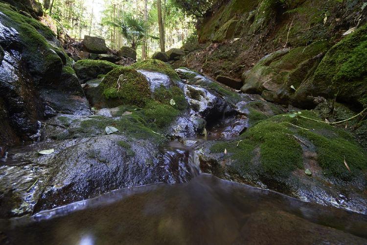 Yaolin National Forest Park1