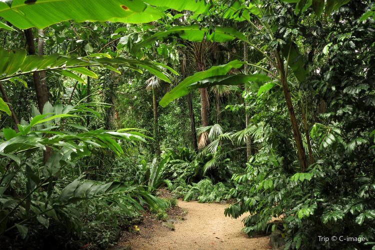 Cairns Botanic Gardens1