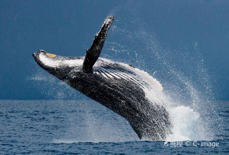 美蕊沙出海觀鯨