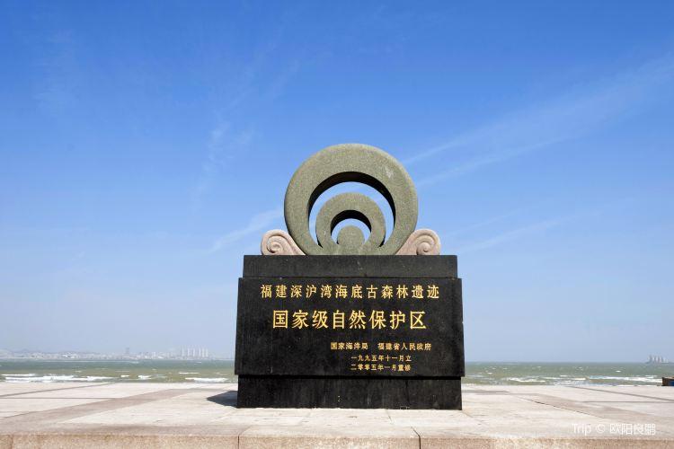심호만해저 원시림 유적 자연보호구역3
