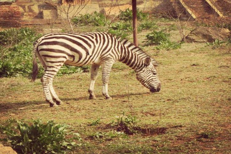 九峰森林動物園4