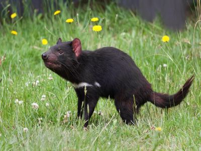 Tasmania Devil Park