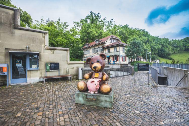 Bear Park3