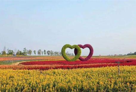 Yangsha Lake Colorful Flower Field