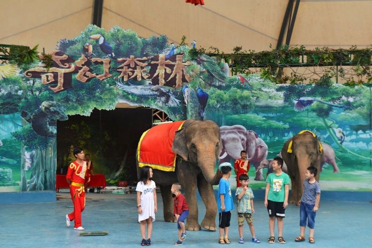Xiangshi Zoo4