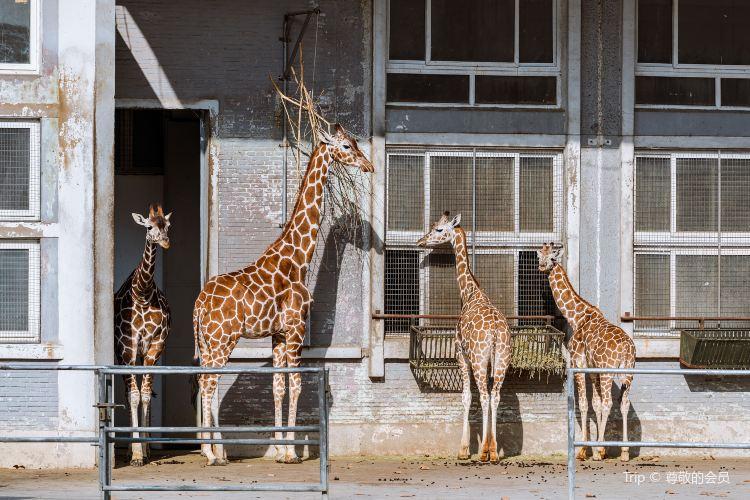 상하이 동물원2