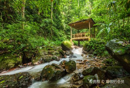 Moli Tropical Rainforest Scenic Area