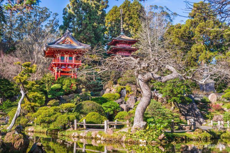 日本茶園2