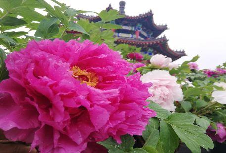 Tongmengxiangcun Siji Qinzi Amusement Park