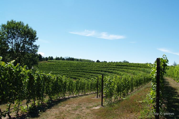 Black Star Farms Winery2