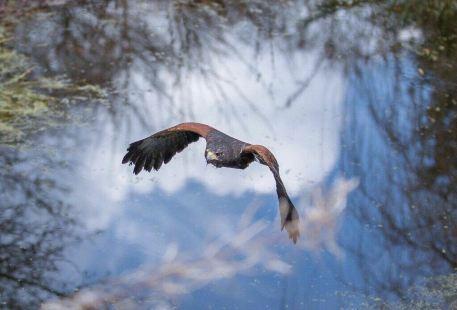 Cumberland Bird Of Prey Centre