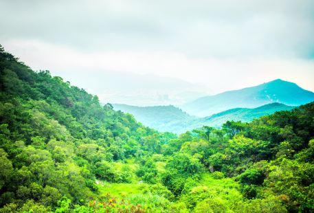 황화산삼림공원