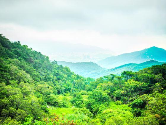 黃花山森林公園