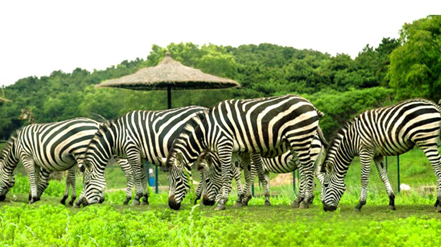 Shenyang Forest Wild Zoo