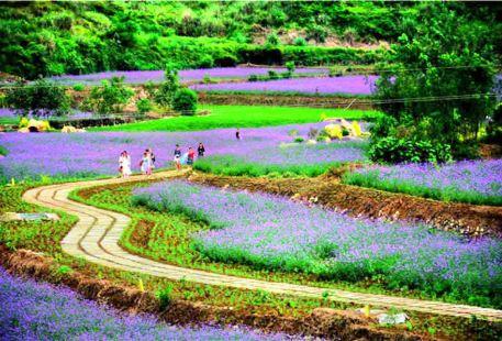 Fengqigu Flower Sea