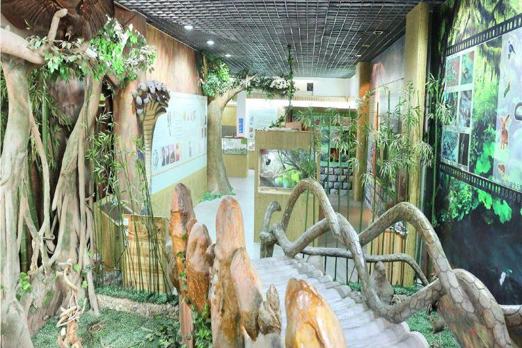 Wuyi Snake Garden2