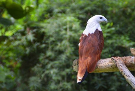 Philippine Eagle Centre