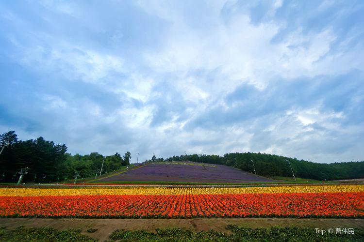 Choei Lavender Park2