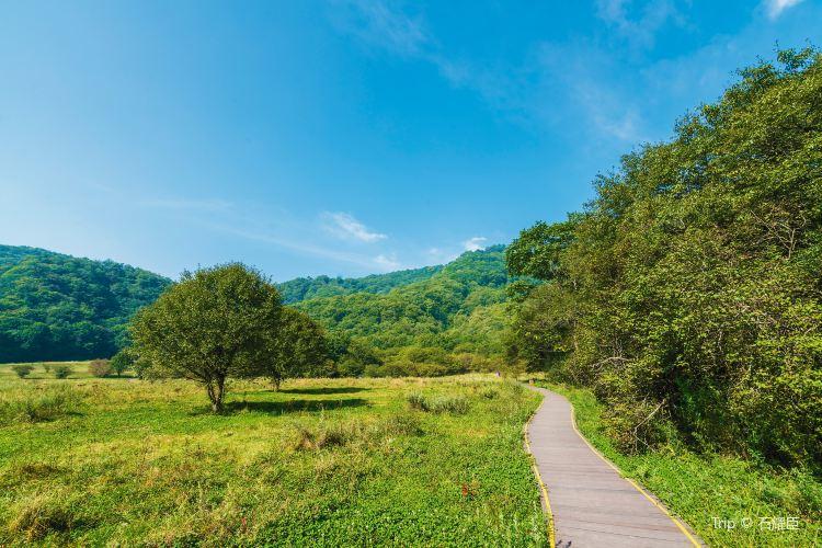 大九湖國家濕地公園2