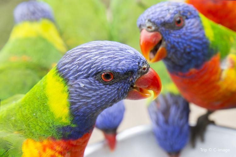 可倫賓野生動物保護區2