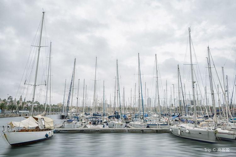 奧林匹克港4