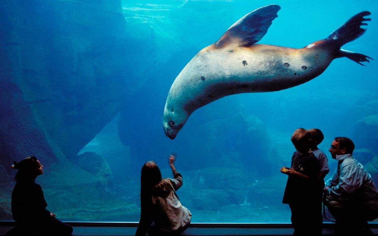 阿拉斯加海洋動物中心