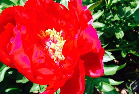 Klehm Arboretum & Botanic Garden
