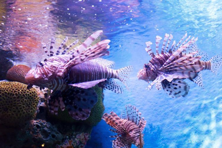 蘇梅水族館和老虎園1