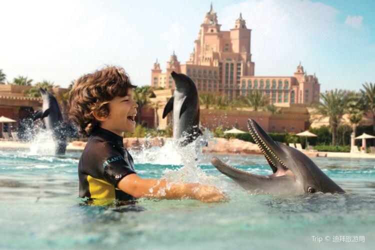 Dolphin Bay2