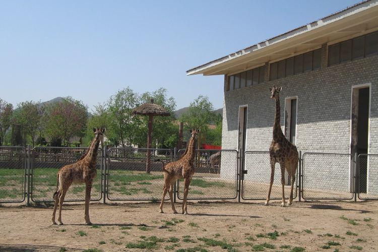 스자좡 도심 동물원1