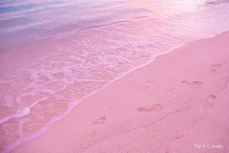 Pink Sand Beach3