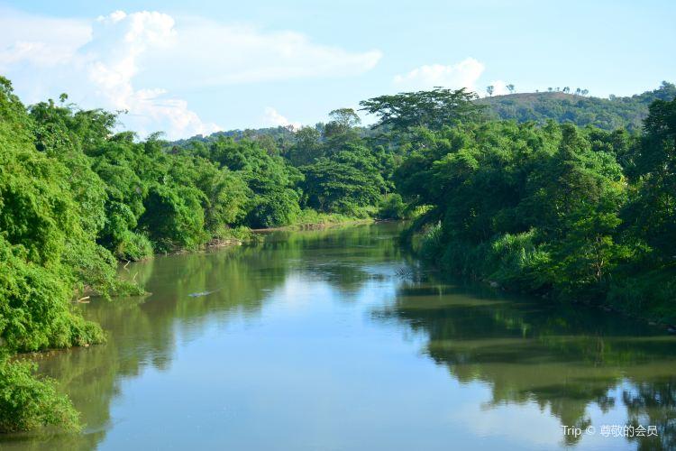 Kawa Mangrove1