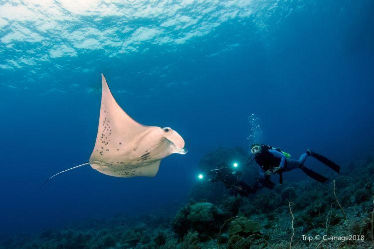Tubbataha Reef National Park3