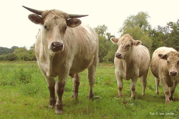 Animal Farmyard3