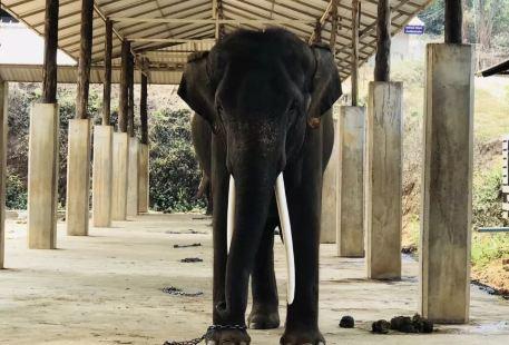 大象保育院