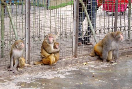 Xining Zoo